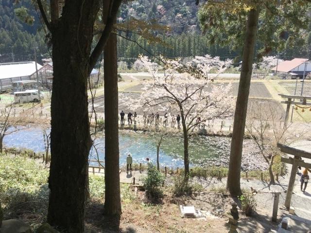 根道神社からの名もなき池(モネの池)