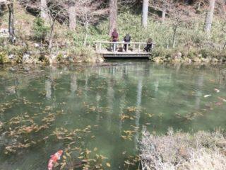 名もなき池(モネの池) 正面
